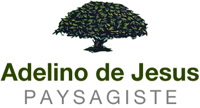 Pereira de Jesus Adelino José