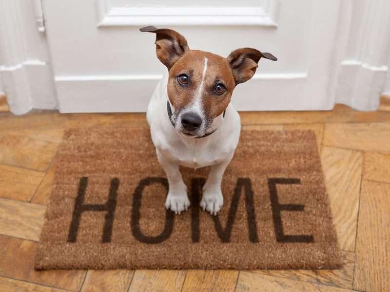 Comment bien prendre soin de son chien