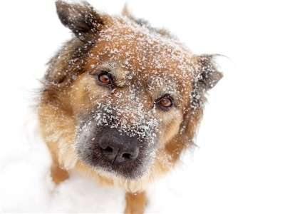 Des astuces pour protéger votre chien du froid