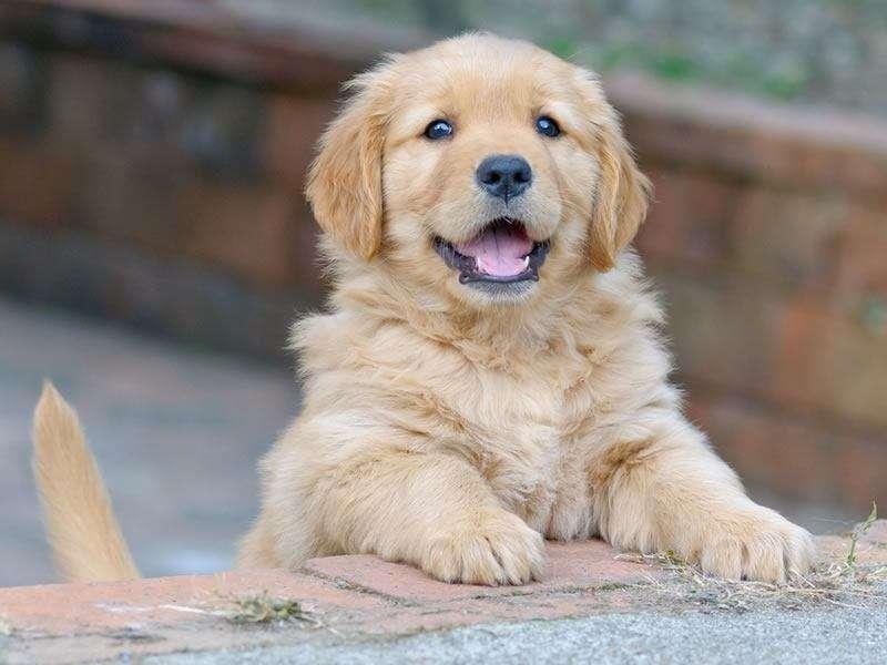 Adopter un chiot ou un chien adulte ?