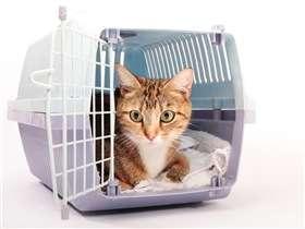 Conseils pour emmener votre chat chez le vétérinaire
