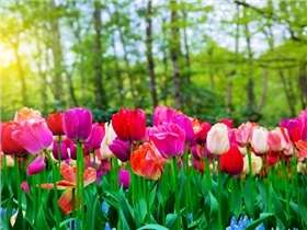 Jardin en mai : conseils et travaux à réaliser