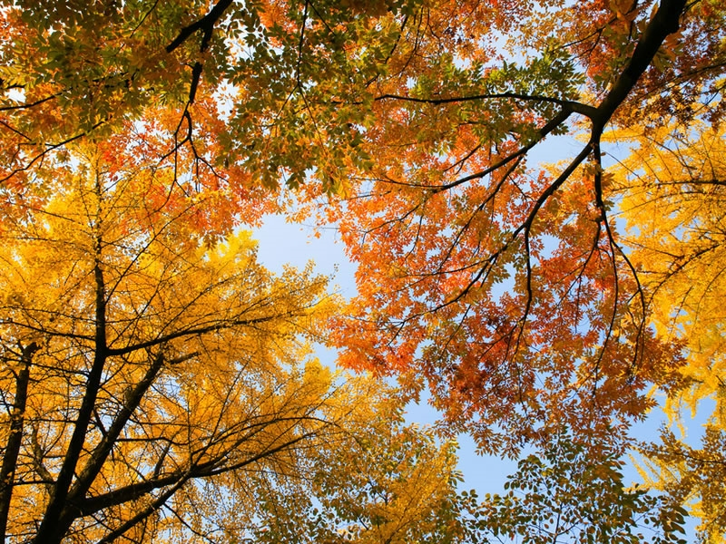 Jardinage en novembre conseils et travaux r aliser for Conseils en jardinage