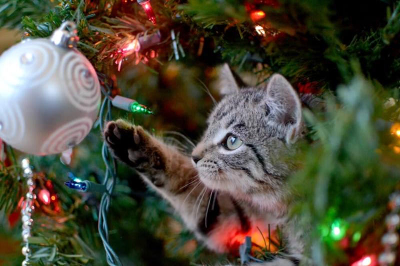 Wie rette ich deinen Baum vor den Krallen deines Tieres?