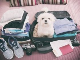 6 solutions pour faire garder votre animal pendant vos vacances