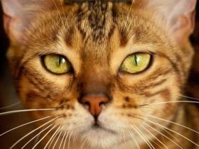 10 choses à savoir sur les moustaches de votre chat
