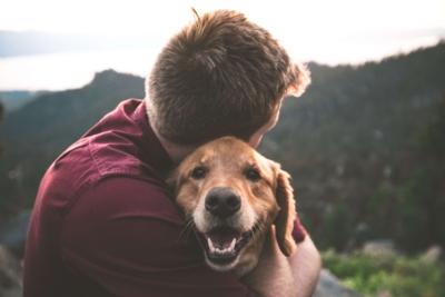 Les bonnes questions à se poser avant d'adopter un animal