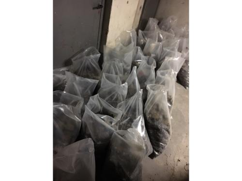 Evacuation des fientes pigeons - sacs fermés et désinfectés
