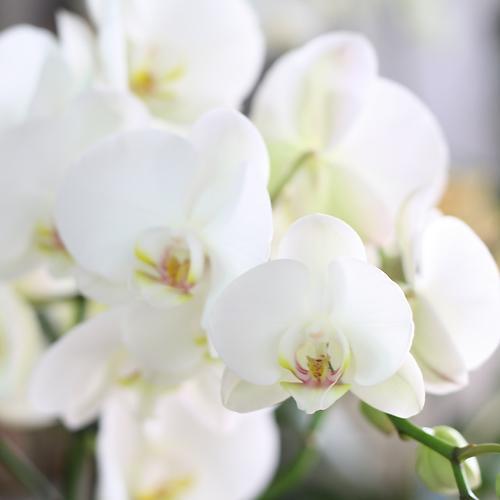 Nos fleurs - les orchidées