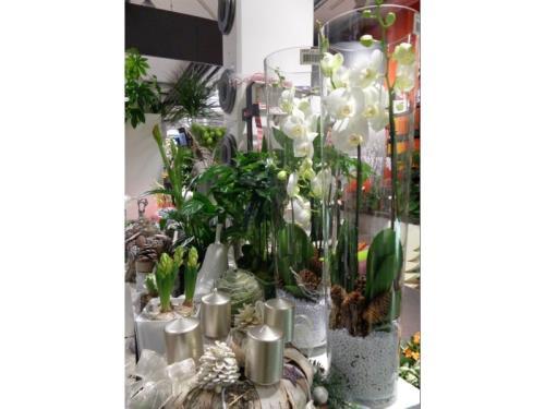 Plantes, divers choix