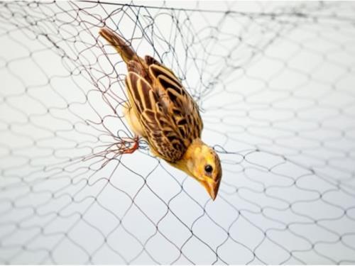 Traitement répulsif contre les oiseaux
