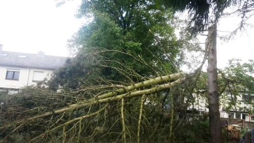 Élagages et abattage d'arbres dangereux