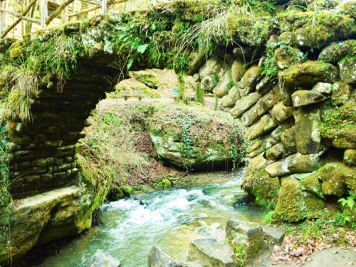 Group Offer: First steps in the Mullerthal