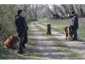 Ecole pour chien