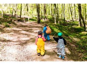 Promenades en forêt