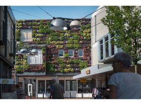 Mur végétal extérieur vivant