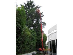 Abattage, élagage d'arbres dangereux