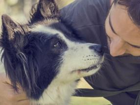 Articles pour chiens
