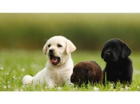 Pension pour trois chiens