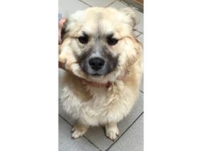Pension pour un chien